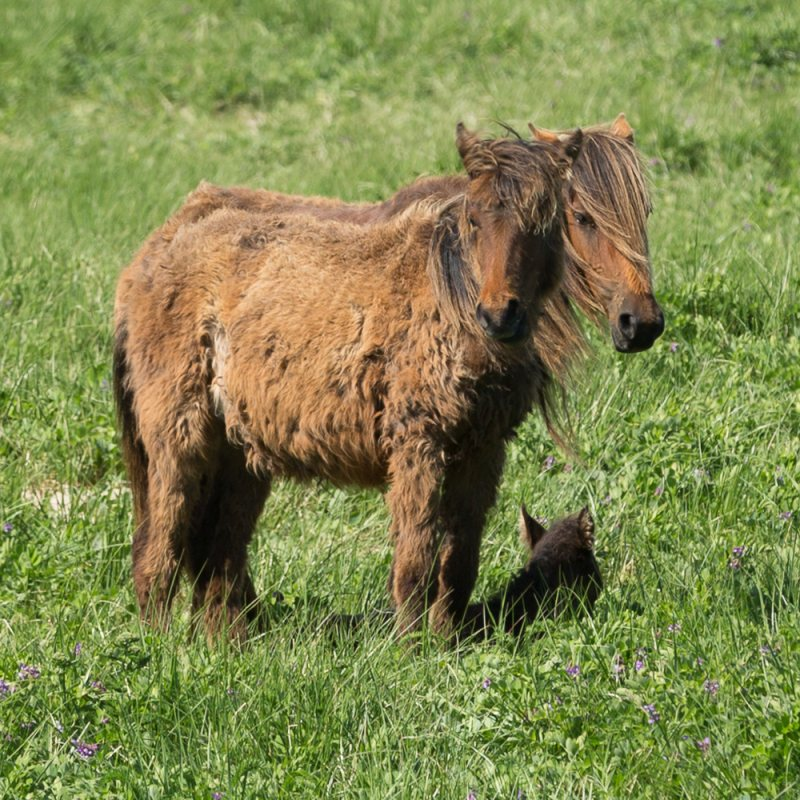 Parenting on Sable Island